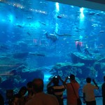 Další pohled na akvárium