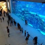 Akvárium v centru The Dubai Mall