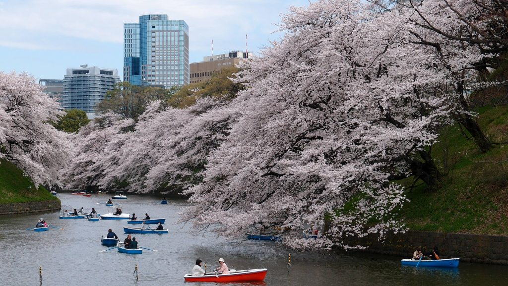 Kanál v Tokiu s kvetoucími sakurami