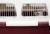 Jak postupovat krok za krokem, když se rozhodnete cestovat letadlem se psem nebo kočkou